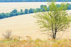 Ajardine com campo com trigo, a árvore e o prado maduros Imagem de Stock Royalty Free