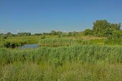 Ajardine com campo verde ensolarado com um pântano e árvores no reerve da natureza de Kalkense Meersen, Flanders, Bélgica Foto de Stock Royalty Free
