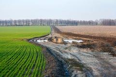 Ajardine com campos agrícolas do centeio do trigo de inverno e a estrada suja Foto de Stock Royalty Free