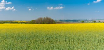 Ajardine com campos de florescência da colza perto da cidade de Dnepr, Ucrânia Fotografia de Stock Royalty Free