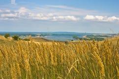 Ajardine com campos de grama amarelos secos perto de Danube River Fotografia de Stock