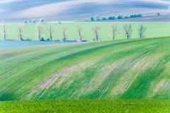Ajardine com campos e as árvores verdes ondulados listrados na primavera Foto de Stock Royalty Free