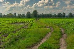 Ajardine com campos e estrada secundária do girassol em Ucrânia central Fotos de Stock Royalty Free
