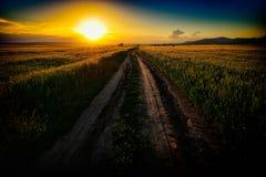 ajardine com campos no por do sol do verão, Dobrogea, Romênia Fotografia de Stock