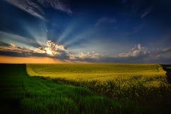 Ajardine com campos no verão no por do sol, Romênia Foto de Stock