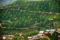 Ajardine com campos verdes do chá em Sri Lanka Imagem de Stock Royalty Free