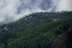 Ajardine com campos verdes do chá em Sri Lanka Fotografia de Stock