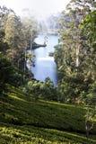 Ajardine com campos verdes do chá em Sri Lanka Fotografia de Stock Royalty Free