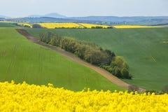 ajardine com campos verdes e amarelos sob o céu azul Fotografia de Stock Royalty Free