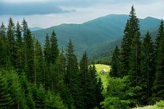 Ajardine com casa de madeira em um prado entre a floresta da montanha Foto de Stock Royalty Free