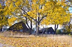 Ajardine com casas de madeira e as árvores de bordo amarelas do outono Imagens de Stock