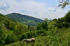 Ajardine com cavalo, montanhas, floresta e prado Foto de Stock Royalty Free