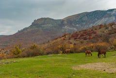 Ajardine com cavalos pastam no vale dos fantasmas em montanhas crimeanas perto do recurso de Alushta Imagens de Stock Royalty Free
