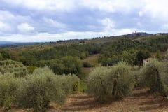 Ajardine com ciprestes e oliveiras próximo de San Gimignano_T Imagens de Stock