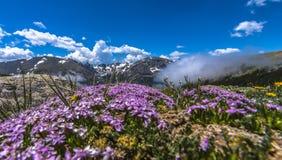 Ajardine com céu azul e árvores em Colorado Fotografia de Stock