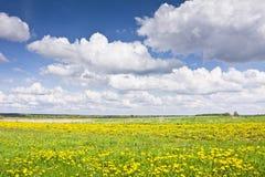 Ajardine com dentes-de-leão, prados e nuvens em um céu azul Foto de Stock Royalty Free