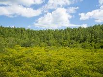 Ajardine com dia árvores minúsculas do primeiro plano borrado e dos céus nebulosos Fotografia de Stock Royalty Free