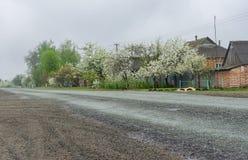 Ajardine com a estrada através da vila Khukhra, oblast de Sumskaya, Ucrânia Fotografia de Stock Royalty Free