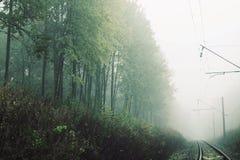 Ajardine com a estrada de ferro na floresta na névoa Foto de Stock Royalty Free