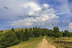 Ajardine com a estrada de floresta vazia através do prado Foto de Stock Royalty Free