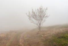 Ajardine com estrada de terra, a árvore só e a névoa na reserva natural de Babuhan Yaila na península crimeana Imagens de Stock