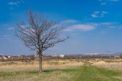 Ajardine com estrada de terra e o carvalho só na borda da estrada nos subúrbios da cidade de Dnipro, Ucrânia Imagens de Stock Royalty Free