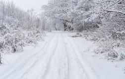 Ajardine com estrada de terra em uma floresta nevado Foto de Stock Royalty Free