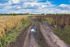 Ajardine com a estrada de terra entre o milho e os campos do girassol em Ucrânia central Imagens de Stock