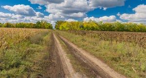 Ajardine com a estrada de terra entre o milho e os campos do girassol em Ucrânia central Imagem de Stock