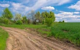 Ajardine com a estrada de terra na borda do campo de trigo verde Foto de Stock