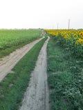 Ajardine com estrada e campo rurais dos girassóis Foto de Stock Royalty Free