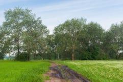 Ajardine com a estrada entre o trigo mourisco e o campo de trigo de florescência em Ucrânia central Foto de Stock