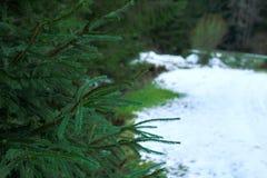 Ajardine com a estrada nevado no inverno através de uma floresta do pinho Imagem de Stock Royalty Free
