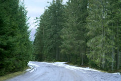 Ajardine com a estrada nevado no inverno através de uma floresta do pinho Foto de Stock