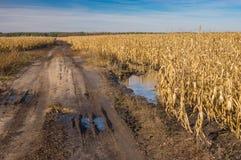 Ajardine com a estrada secundária suja entre campos agrícolas com milho Fotos de Stock Royalty Free