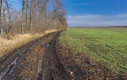 Ajardine com estrada suja ao lado de um campo agrícola com fileiras de colheitas do inverno em Ucrânia Foto de Stock Royalty Free