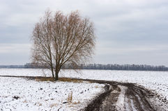 Ajardine com a estrada suja entre campos agrícolas e a árvore só na borda da estrada, Ucrânia central Foto de Stock Royalty Free