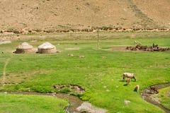 Ajardine com exploração agrícola local, vacas e yurts asiáticos centrais das barracas no vale verde do rio estreito Imagem de Stock Royalty Free
