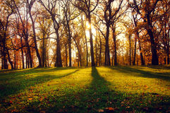 Ajardine com feixes do sol na madeira do outono Imagem de Stock Royalty Free