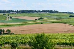 Ajardine com fileiras das videiras e do campo de trigo em França Foto de Stock