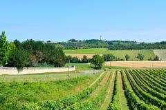 Ajardine com fileiras das videiras e do campo de trigo em França Imagem de Stock