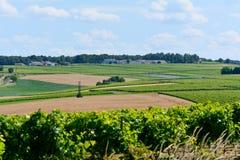 Ajardine com fileiras das videiras e do campo de trigo em França Imagens de Stock Royalty Free