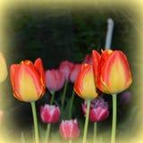Ajardine com a flor no jardim nos plenos verões, em um dia ensolarado Fotos de Stock