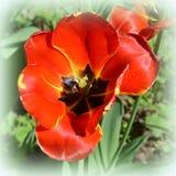 Ajardine com a flor no jardim nos plenos verões, em um dia ensolarado Foto de Stock
