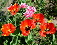 Ajardine com a flor no jardim nos plenos verões, em um dia ensolarado Foto de Stock Royalty Free