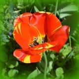 Ajardine com a flor no jardim nos plenos verões, em um dia ensolarado Imagem de Stock Royalty Free