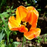 Ajardine com a flor no jardim nos plenos verões, em um dia ensolarado Fotografia de Stock