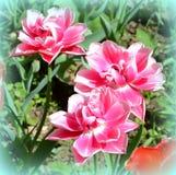 Ajardine com a flor no jardim nos plenos verões, em um dia ensolarado Fotografia de Stock Royalty Free