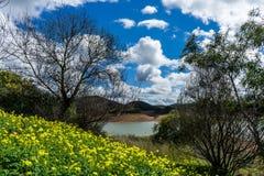 Ajardine com flores amarelas na frente de um lago pequeno Foto de Stock Royalty Free