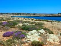 Ajardine com flores de Erica e a terra árida e o Mediterra Foto de Stock